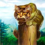 Кто такой Ёшкин кот?