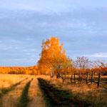 Анализ стихотворения «Когда волнуется желтеющая нива»